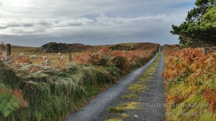 Ireland-road-tip