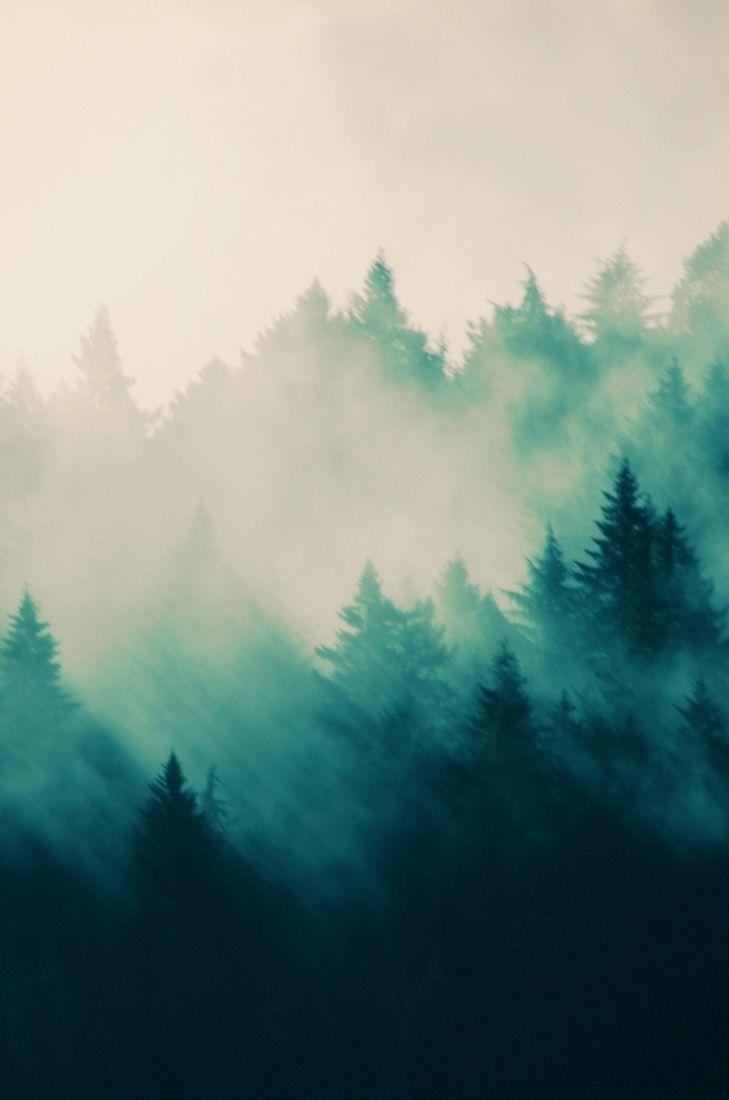 7ca98fbead0043a87c3b10c6daedd0db--pine-tree-art-pine-tree-painting